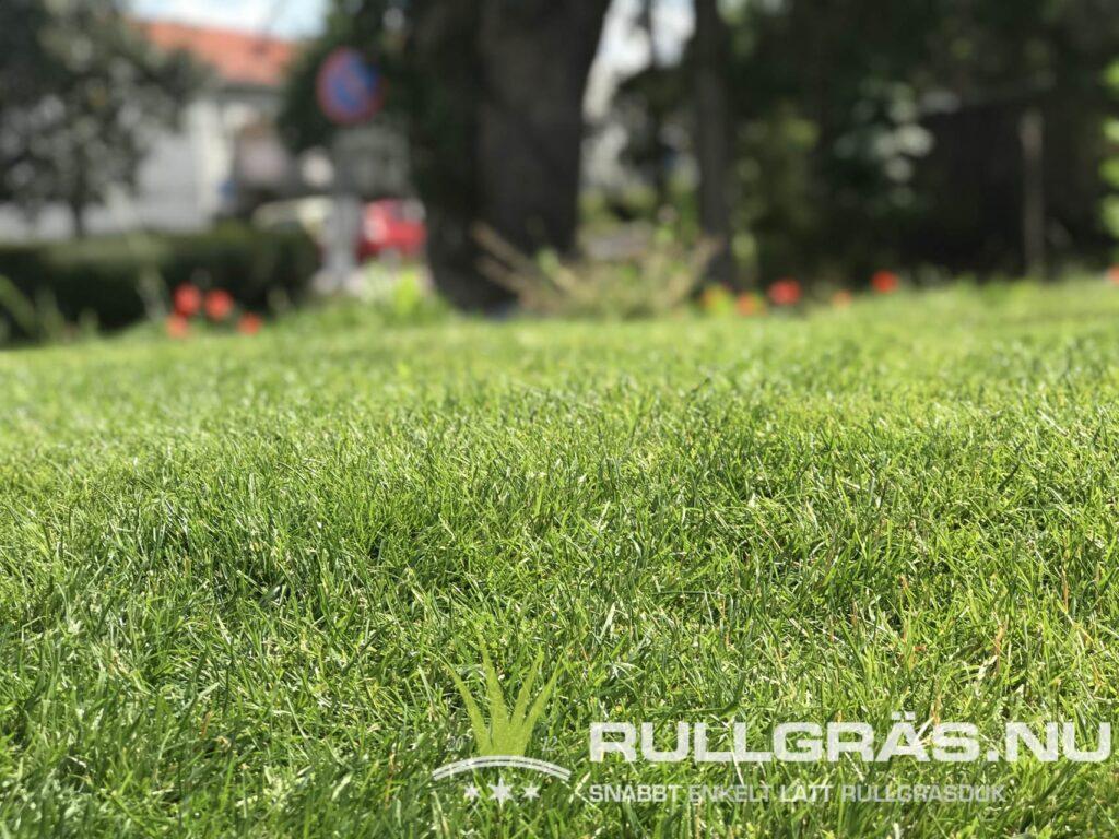 Rullgräs - gräsmatta på duk