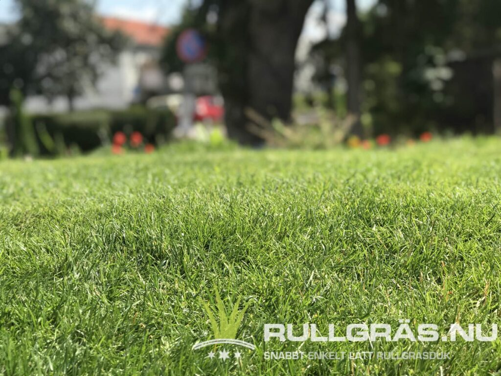 Anlägg gräsmatta Smart Rullgräs