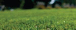 Smart Rullgräs Rullgräsduk