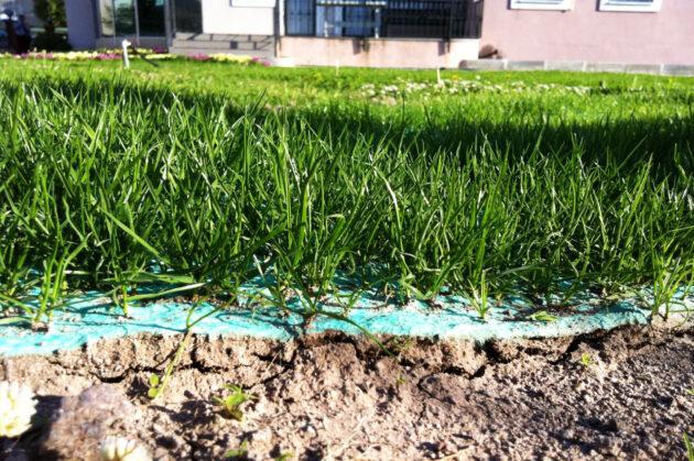 TurfQuick Rullgräs.nu
