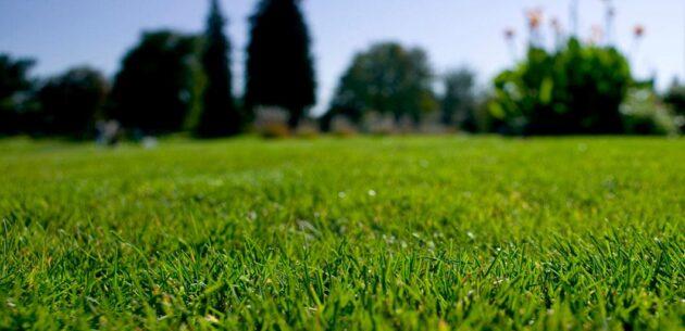 Rullgräs BIO-gräs textil