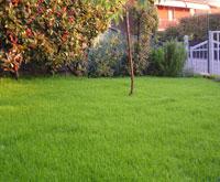 Vattna gräsmattan Gödsel finns redan
