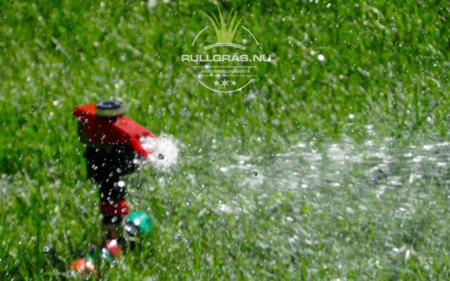 Mindre bevattning Anlägga gräsmatta rullgräs
