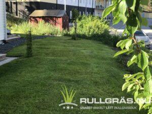 Framsidan gräsmatta
