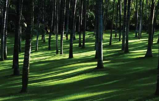 Skugga rullgräs