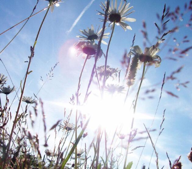 Fleråriga blomsterängar - Vildäng Trädgård - Alternativ till gräsmatta eller komplement