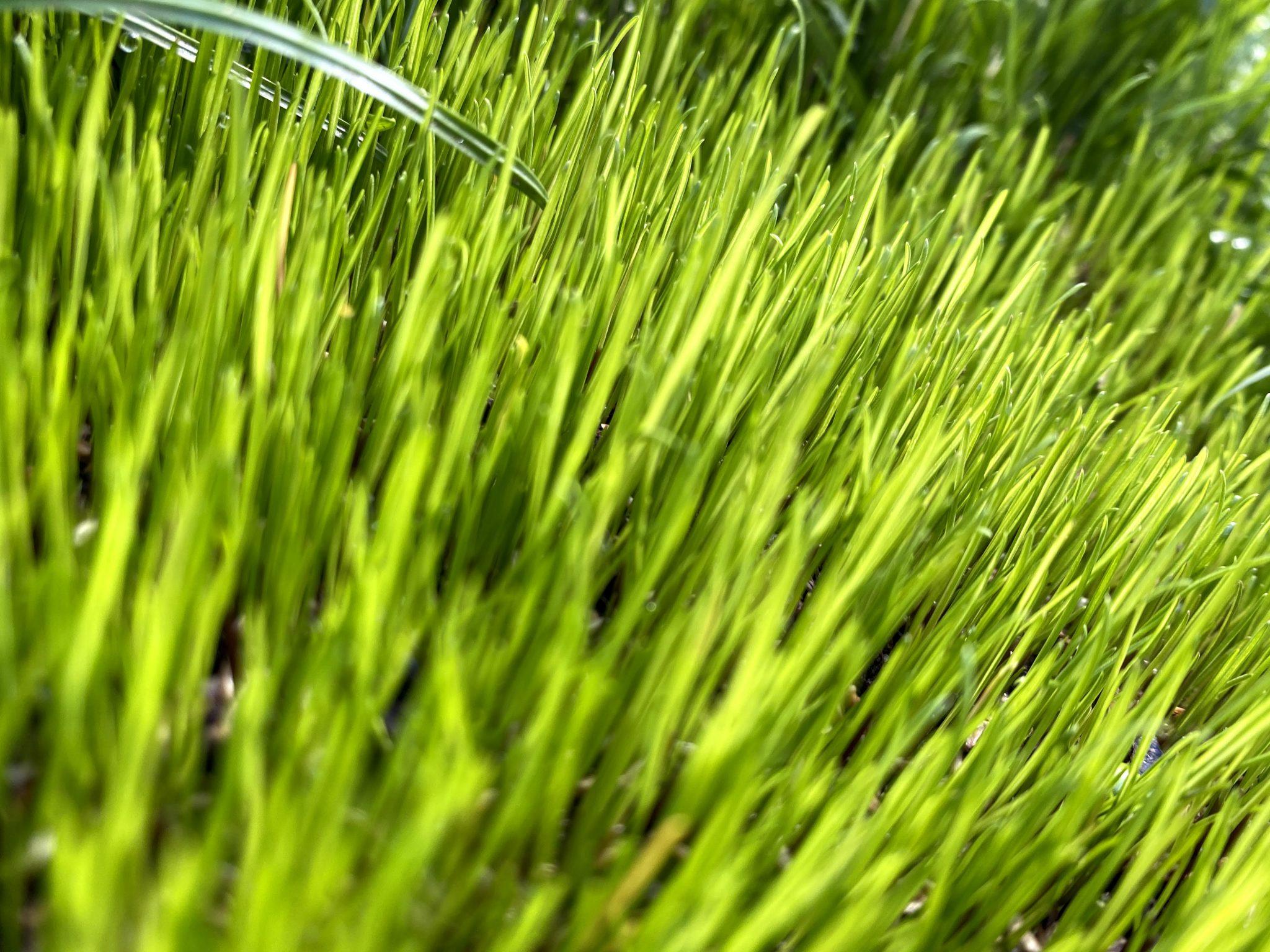 Reparation av gräsmatta såddmetoden frömetoden rullgräs.nu