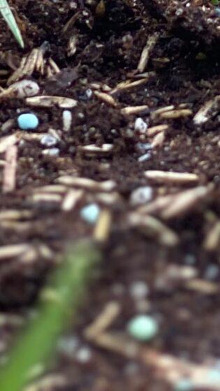 Gräsfrön och nyetableringsgödsel Premium